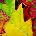autumn-474880_640-thmb